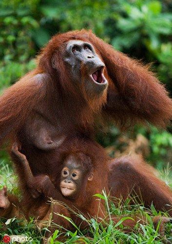 Những khoảnh khắc muốn độn thổ của động vật hoang dã