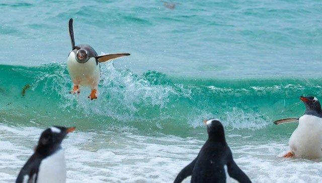 Những khoảnh khắc siêu hài hước trong thế giới động vật