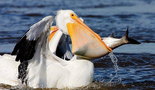 Những loài động vật có miệng rộng trên thế giới