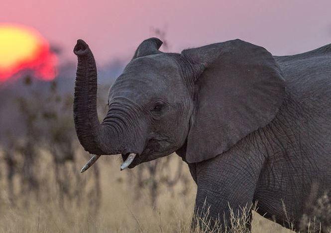 Những loài động vật lãng mạn nhất thế giới