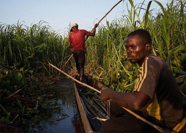 Những loài rắn kịch độc trong rừng rậm Congo