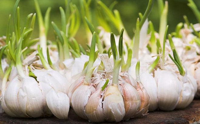Những loại thực phẩm mọc mầm tuyệt đối không nên ăn và nên cân nhắc khi ăn