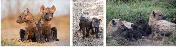 Những loài vật tàn ác nhất: hạ sát anh chị em ngay khi mới chào đời!