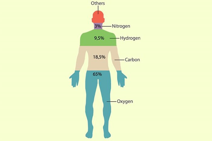 Những nguyên tố hóa học nào có trong cơ thể người?
