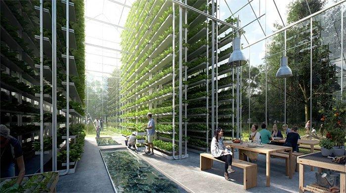 Những thành phố hiện đại kết hợp vườn cây, trang trại nuôi bò