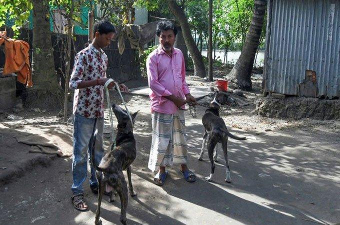 Nỗ lực cứu giống chó Sarail biểu tượng của Bangladesh