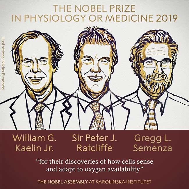 Nobel Y Sinh 2019 cho nghiên cứu phản ứng của tế bào khi oxy thay đổi