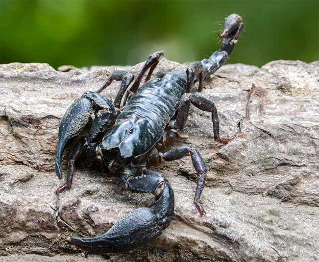 Nọc độc của 5 loài vật này được ví như thuốc quý trong y học