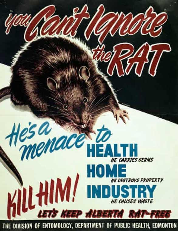 Nơi duy nhất trên thế giới quét sạch loài chuột