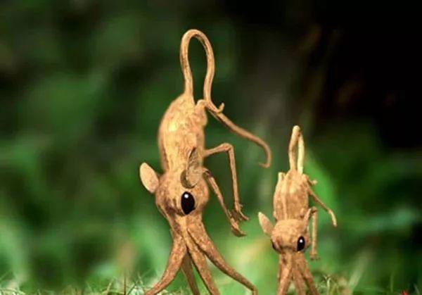 Nosewalker - Loài động vật kì lạ nhất Trái đất, dù có chân nhưng lại dùng mũi để di chuyển