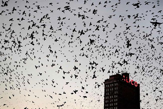 Nửa thế kỷ, riêng Bắc Mỹ mất 3 tỉ con chim