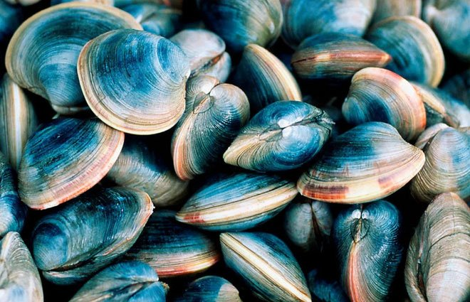 Nước biển ấm lên đe dọa các loài sinh vật biển có vỏ vì chúng bị kẹt ở vùng nước ấm