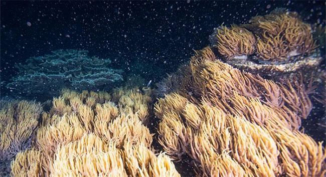 Phá vỡ sự yên tĩnh ma quái, sử dụng âm thanh để phục hồi… các rạn san hô chết