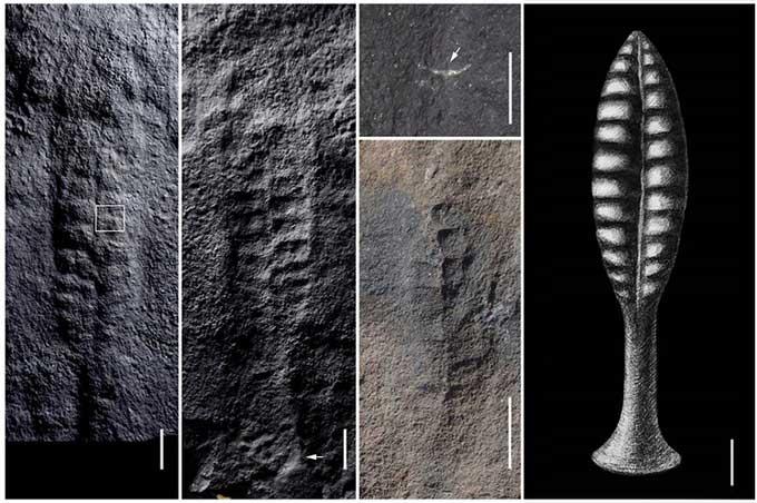 Phát hiện 4 hóa thạch sinh vật biển nửa tỷ năm tuổi ở khu vực đập Tam Hiệp