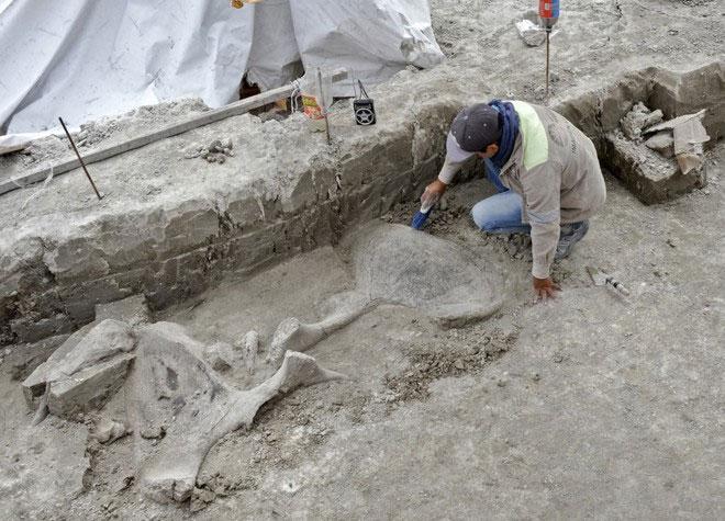 Phát hiện bẫy voi ma mút 15.000 năm tuổi ở Mexico