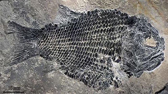 Phát hiện cá hóa thạch niên đại 200 triệu năm ở Trung Quốc