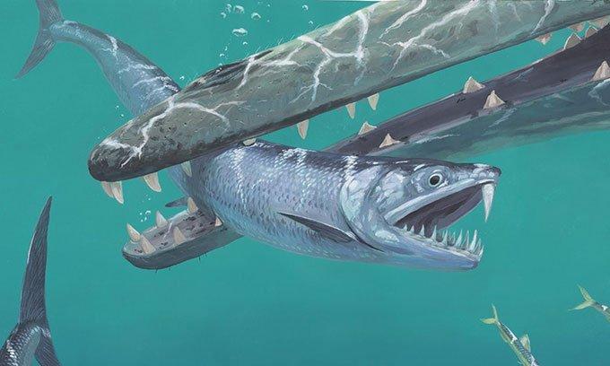 Phát hiện cá ma cà rồng có hàm răng kỳ quái