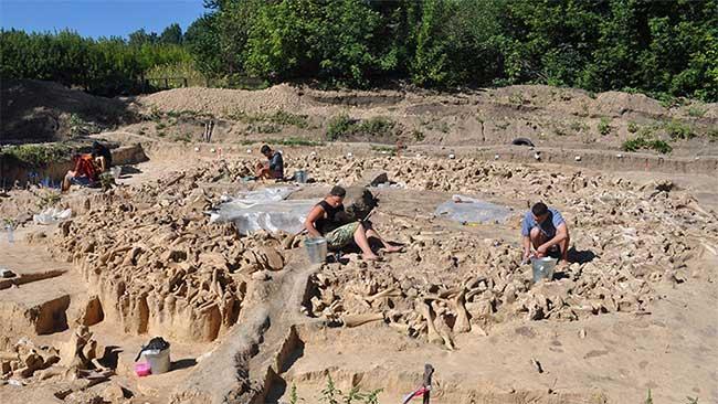 Phát hiện cấu trúc làm từ hàng trăm xương voi ma mút