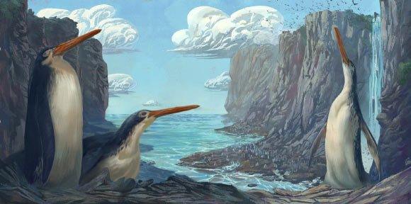 Phát hiện chim cánh cụt khổng lồ cổ đại cao bằng con người