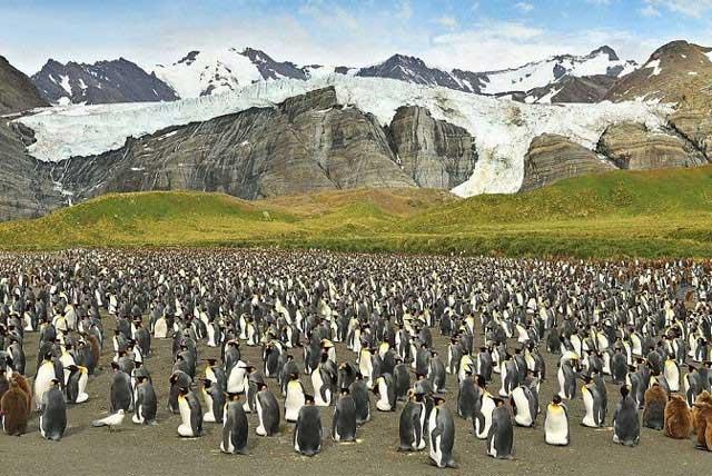 Phát hiện chim cánh cụt màu vàng kỳ lạ, hiếm có khó tìm