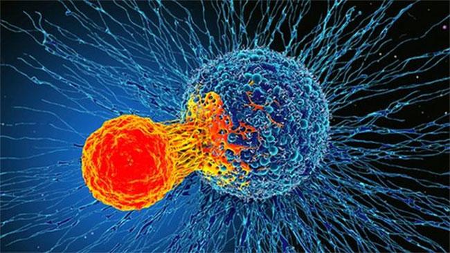 Phát hiện cơ chế miễn dịch có thể điều trị mọi loại ung thư