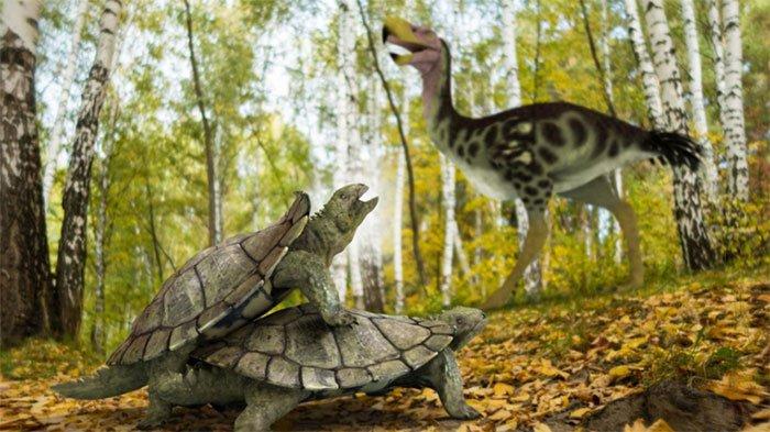 Phát hiện dạng sống kỳ quái của loài rùa đất cổ đại