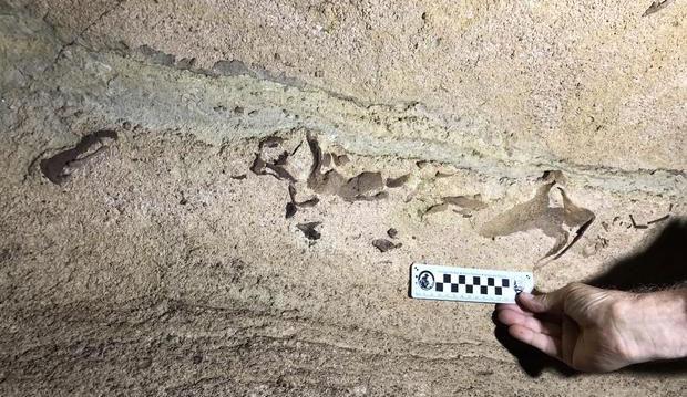 Phát hiện đầu cá mập 330 triệu năm trong hang ở Mỹ