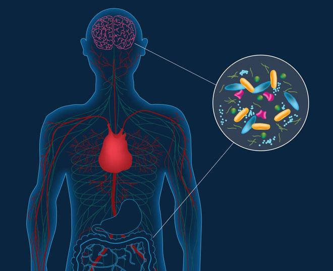 Phát hiện gây chấn động về một hệ vi khuẩn sống ngay trong não người