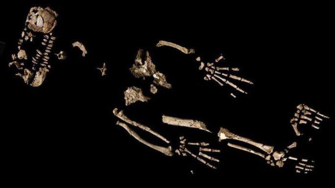 Phát hiện gây sốc: Loài 4,4 triệu tuổi biến đổi nhảy vọt từ tinh tinh thành con người