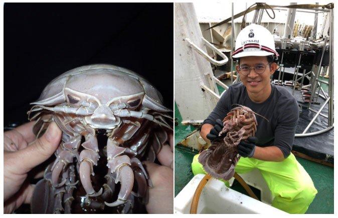 Phát hiện gián biển khổng lồ dài đến 50cm tại Indonesia