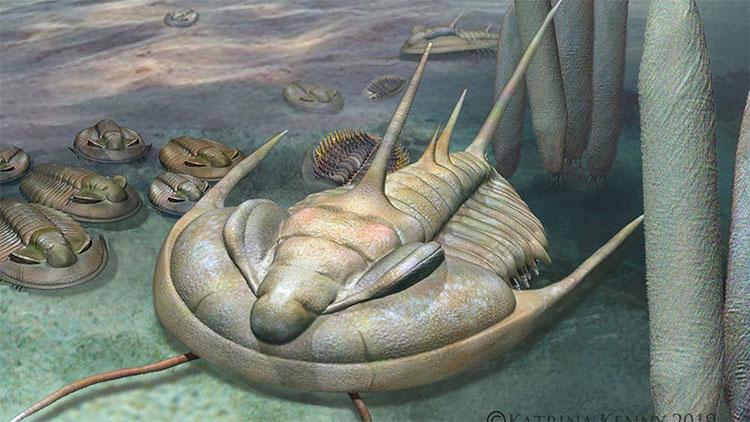 Phát hiện hóa thạch bọ ba thùy khổng lồ ở Australia