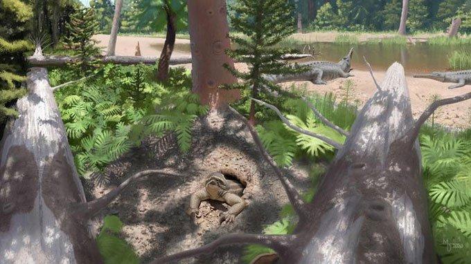 Phát hiện hóa thạch bò sát đào hang kỳ dị