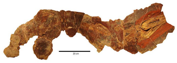 Phát hiện hóa thạch cá mập 370 triệu năm tuổi