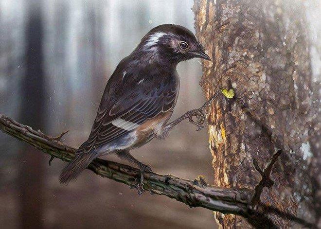 Phát hiện hóa thạch chân chim kỳ lạ 99 triệu năm trong cục hổ phách