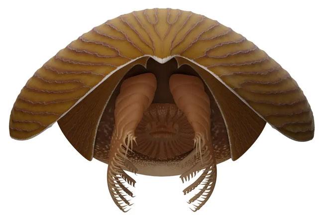 Phát hiện hóa thạch động vật săn mồi khổng lồ 500 triệu năm tuổi tại Canada