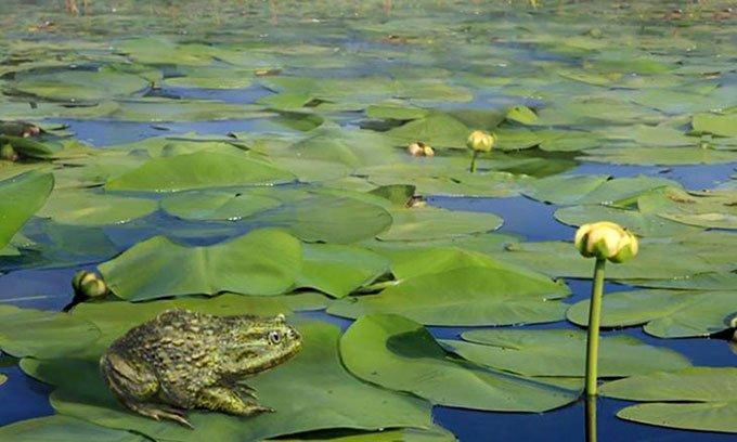 Phát hiện hóa thạch ếch 40 triệu năm tuổi