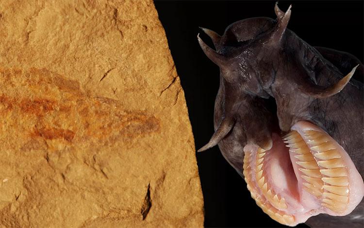 Phát hiện hoá thạch loài cá mù 100 triệu năm tuổi cực hiếm