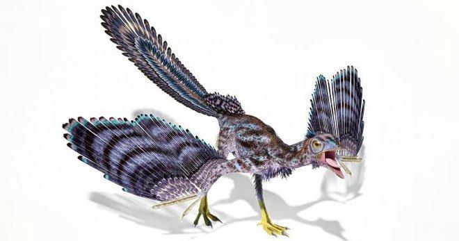 Phát hiện hóa thạch loài khủng long bay giống chim nhất