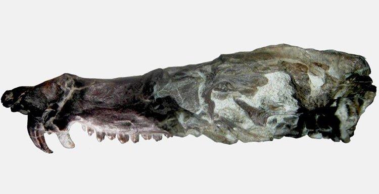 Phát hiện hóa thạch lớp thú giống loài sóc trong Kỷ băng hà
