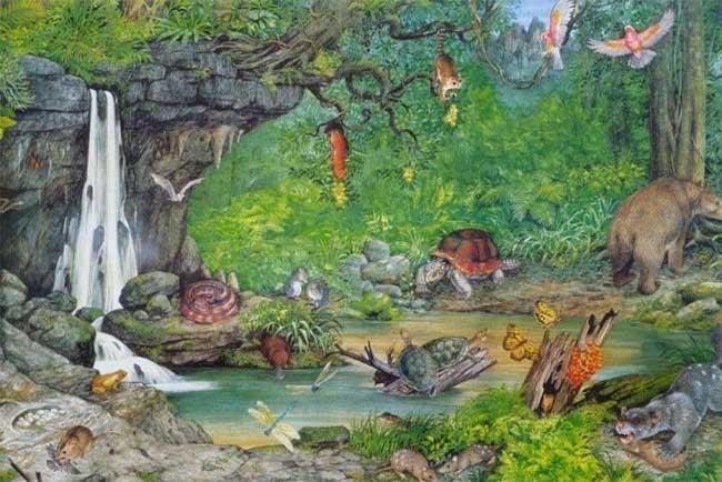 Phát hiện hóa thạch sư tử có túi tuyệt chủng 23 triệu năm ở Australia