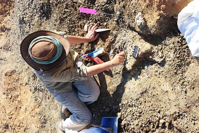 Phát hiện hóa thạch thằn lằn bóng lâu đời nhất ở Australia