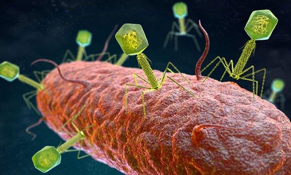 Phát hiện hơn 40.000 virus mới trong ruột người