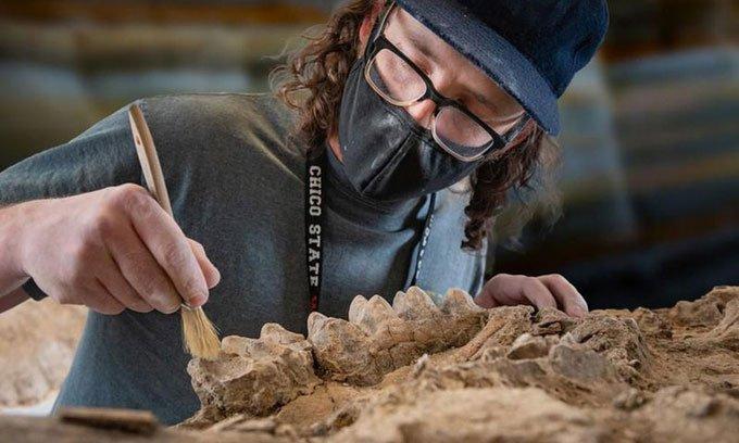 Phát hiện khu rừng cổ đại chứa hàng trăm hóa thạch