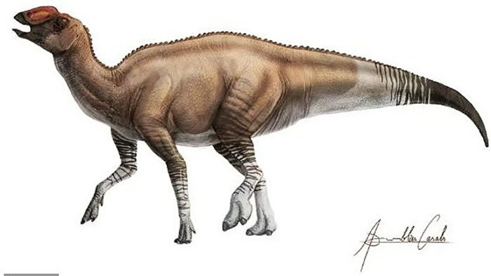 Phát hiện khủng long mỏ vịt dị nhất lịch sử