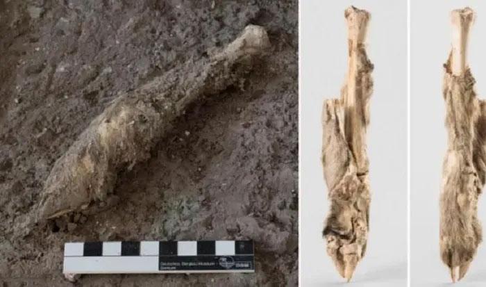 Phát hiện kinh ngạc từ mảnh chân cừu 1.600 năm tuổi