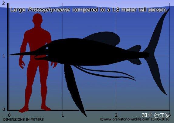 Phát hiện loài cá kiếm cổ đại với hàm răng sắc nhọn ngoại cỡ