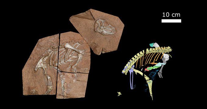 Phát hiện loài khủng long có cách thở cực độc đáo