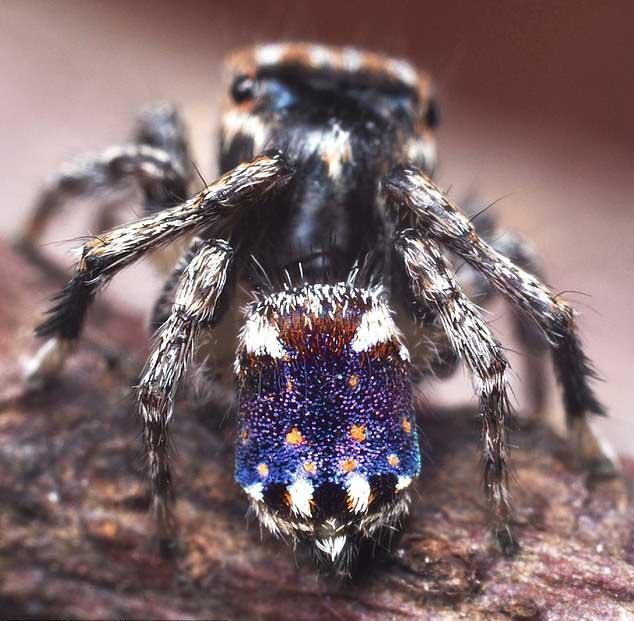 Phát hiện loài nhện hoa văn như tranh của Van Gogh