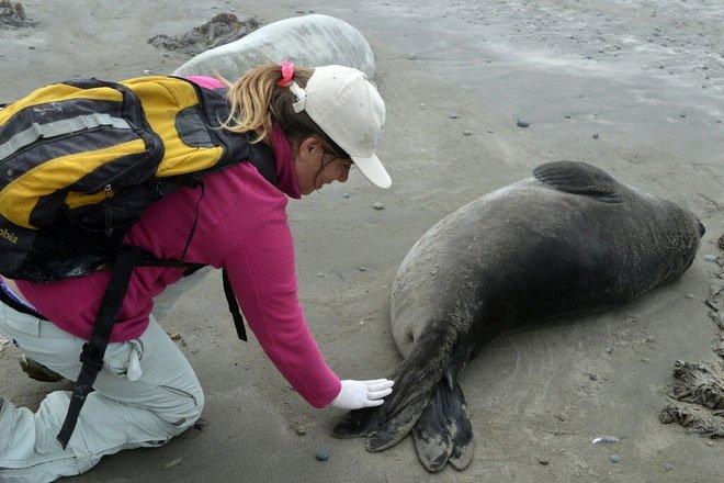Phát hiện loài rận có thể tồn tại dưới đáy đại dương