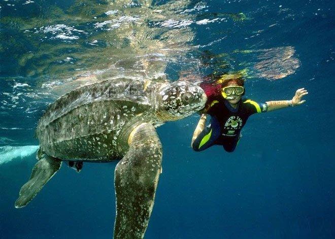 Phát hiện loài rùa biển cổ đại còn to lớn hơn cả một cái ô tô